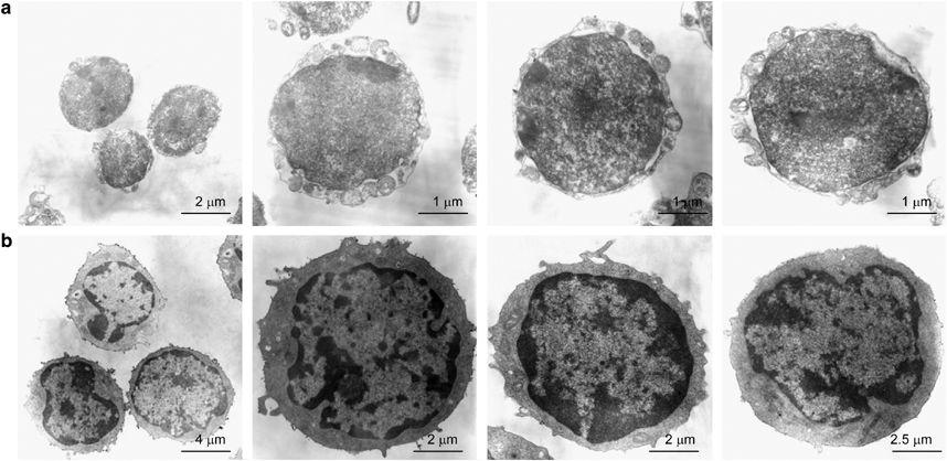 Маленькие эмбрионические стволовые клетки - предшественники для других стволовых клеток?