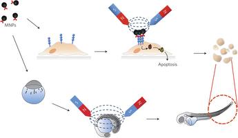 Наночастицы запрограммированные на смерть раковых клеток