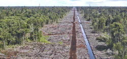 Дренажные канавы могут помочь очистить полевой сток