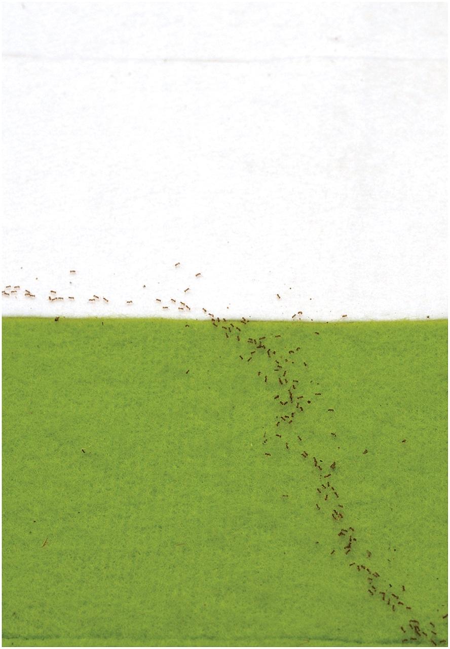 Муравьи следуют принципу наименьшего времени Ферма