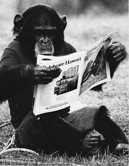 Исследование показывает, что люди и обезьяны изучают язык по-разному