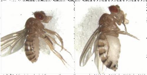 От изучения плодовых мух к лечению рака